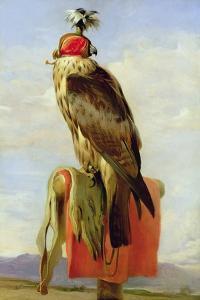 Hooded Falcon by Edwin Henry Landseer