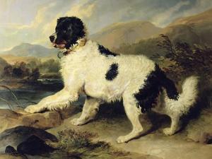 Newfoundland Dog Called Lion, 1824 by Edwin Henry Landseer