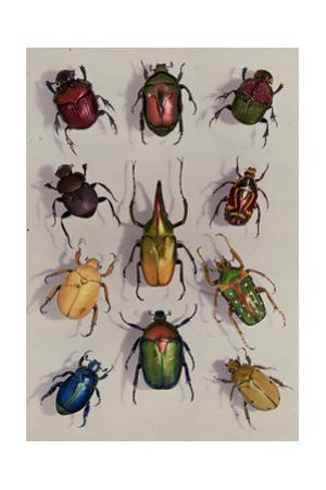 A Group of Scarabs from the Scarabaeid Family by Edwin L^ Wisherd