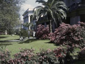 Azaleas Bloom in a Historic Mansion's Front Garden by Edwin L. Wisherd