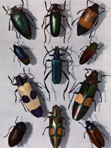 Collection of Beetles by Edwin L. Wisherd