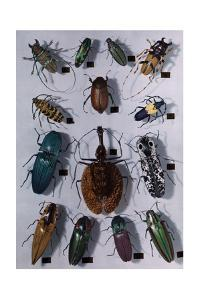 Collection of Various Beetles by Edwin L. Wisherd