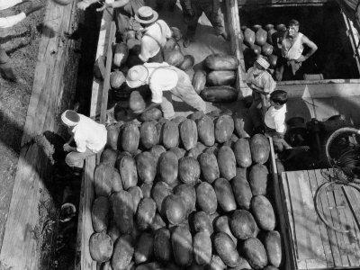 Men Work to Load a Ship Taking Watermelons to Baltimore