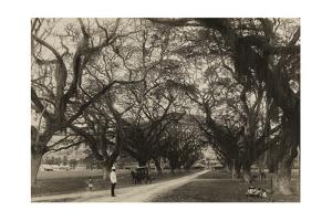 Trinidadians Along a Road Leading to Saint James Police Barracks by Edwin L. Wisherd