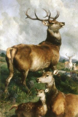Deer of Chillingham Park, Northumberland, C.1867