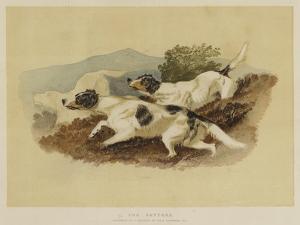 The Setters by Edwin Landseer