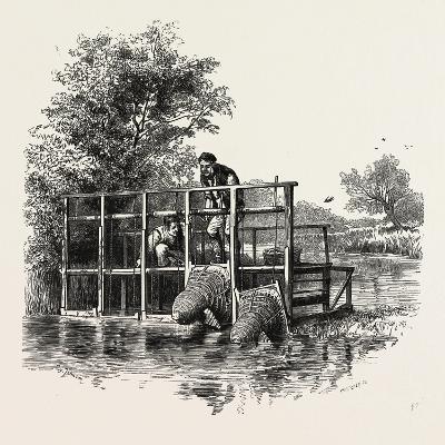 Eel Bucks on the Thames, Scenery of the Thames, UK, 19th Century--Giclee Print