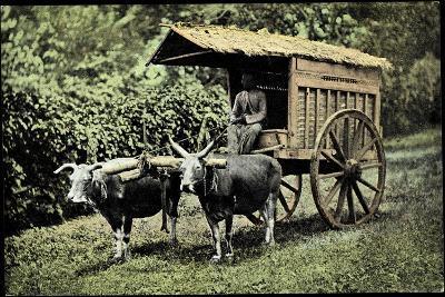 Een Transportwagen Met Karbouwen, Glinding Genaamd, Ochsenkarren--Giclee Print