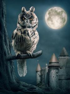 Owl Bird Sitting on Branch at Night by egal