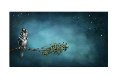 Owl Bird by egal