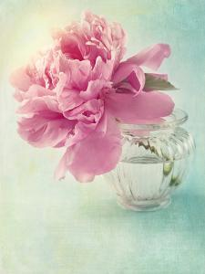 Peony Flower in a Vase by egal