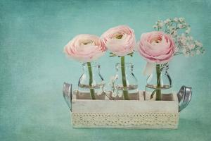 Pink Ranunculus Flowers on a Blue Background by egal