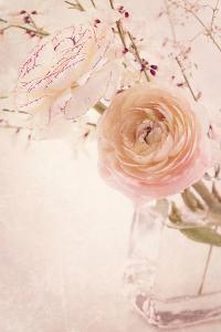 Ranunculus Flowers in a Vase by egal