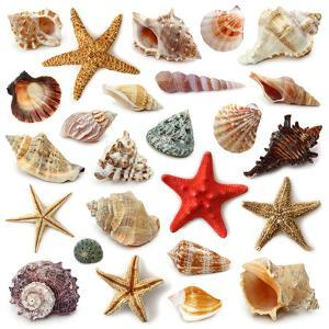 Seashell Collection Isolated on White Background by egal