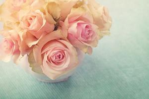 White Roses in a Vase by egal