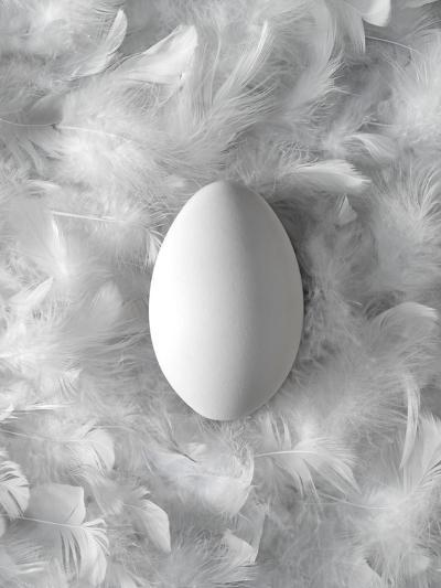 Egg on Feathers, Conceptual Image-Biddle Biddle-Photographic Print
