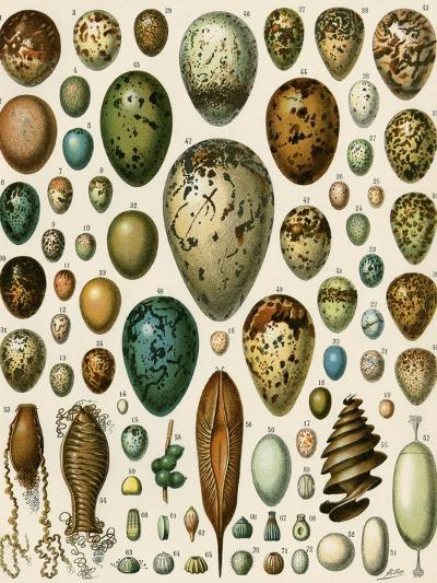 Eggs of Some Birds and Turtles, and Seed Cases of Bryophites and Some Other Plants--Giclee Print