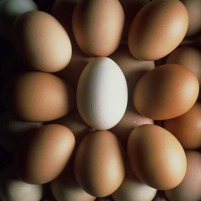 Eggs-Tek Image-Photographic Print