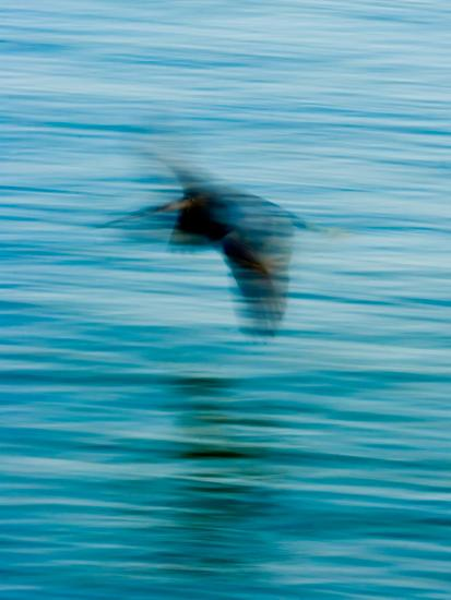 Egret Flying in Blur Caused by Slow Shutter Speed-James White-Photographic Print