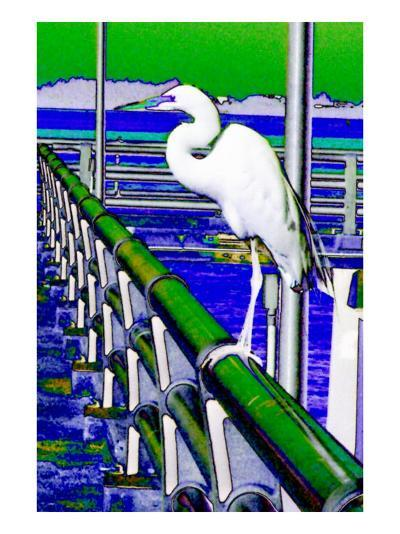 Egret Perched, Florida-Rich LaPenna-Giclee Print