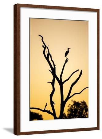 Egret, Savuti Marsh, Chobe National Park, Botswana-Paul Souders-Framed Photographic Print