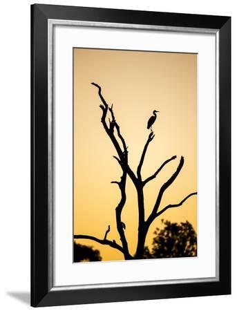 Egret, Savuti Marsh, Chobe National Park, Botswana-Paul Souders-Framed Photographic Print