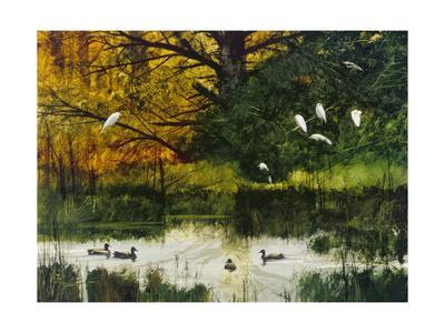 https://imgc.artprintimages.com/img/print/egrets-and-mallards_u-l-q19c3tx0.jpg?p=0