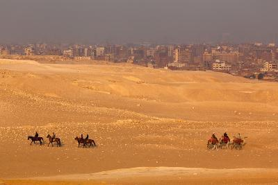 Egypt, Cairo, Giza, Evening Light, Camels and Horses-Catharina Lux-Photographic Print