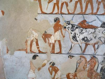 Egypt, Thebes, Luxor, Tomb of Army General Tjenuny, Mural Paintings Showing Cows and Horses--Giclee Print