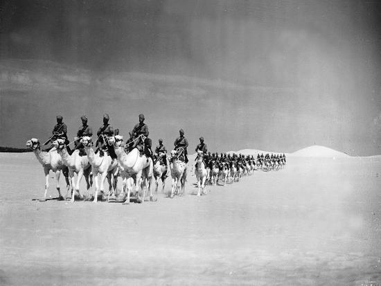 Egyptian Camel Corps--Photographic Print