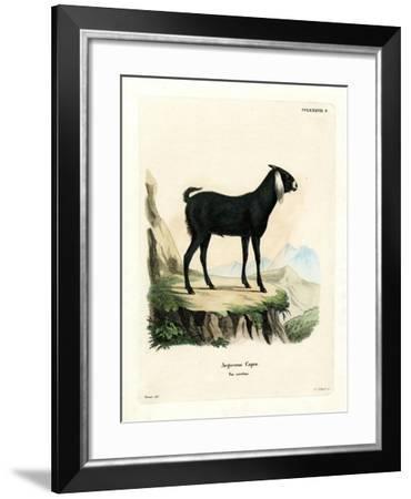 Egyptian Goat--Framed Giclee Print