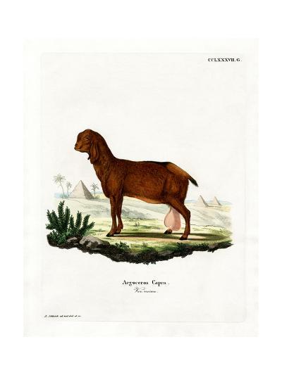 Egyptian Goat--Giclee Print