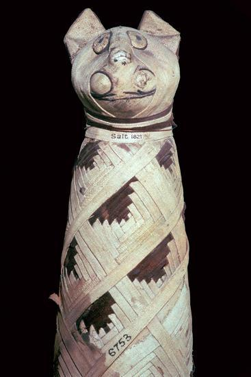 Egyptian mummy of a cat-Unknown-Giclee Print