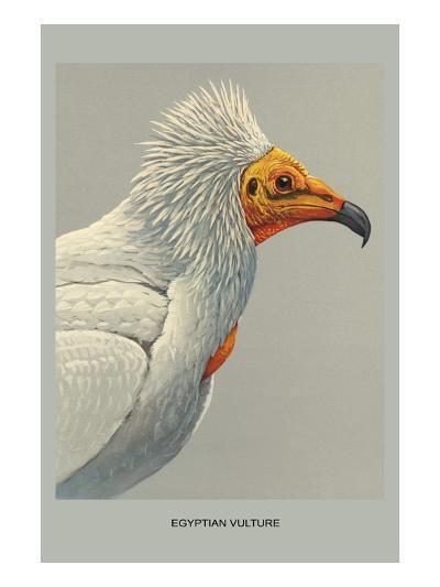 Egyptian Vulture-Louis Agassiz Fuertes-Art Print