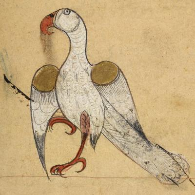 Egyptian Vulture-Aristotle ibn Bakhtishu-Giclee Print