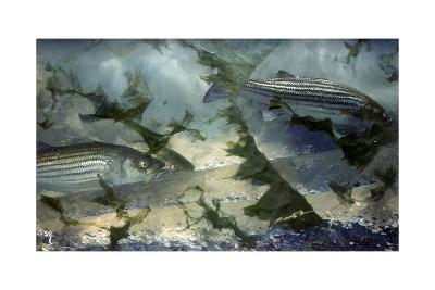 Eight Avenue Asbury, July 1966: Striped Bass Swim the Inshore Waters Off New Jersey's North Shore-Stanley Meltzoff-Giclee Print
