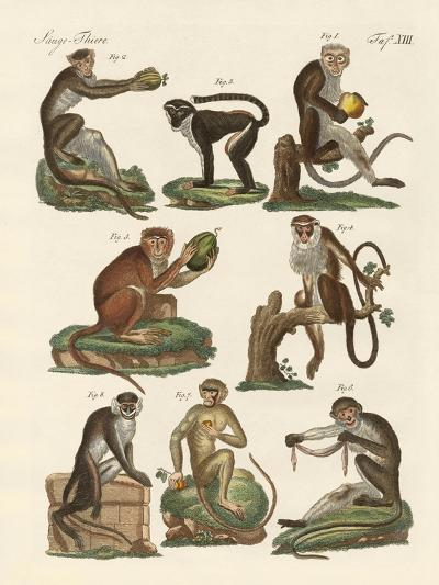 Eight Kinds of Guenon--Giclee Print