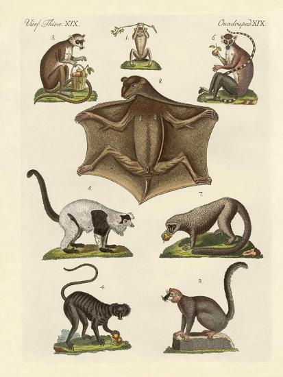 Eight Kinds of Lemurs--Giclee Print