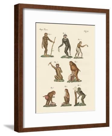 Eight Kinds of Monkeys