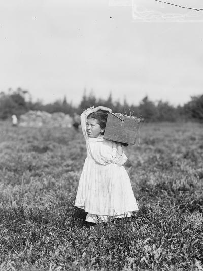 Eight Year Old Jennie Camillo from Philadelphia Picking Cranberries at Theodore Budd's Bog-Lewis Wickes Hine-Photographic Print
