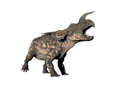 Einiosaurus Dinosaur, White Background