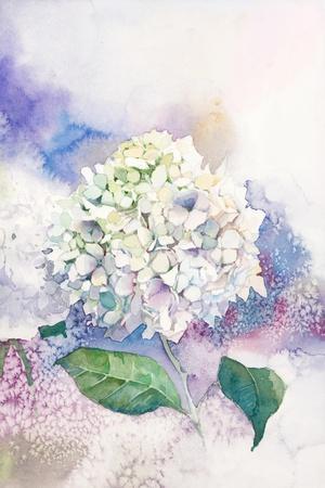 Watercolor White Hydrangea