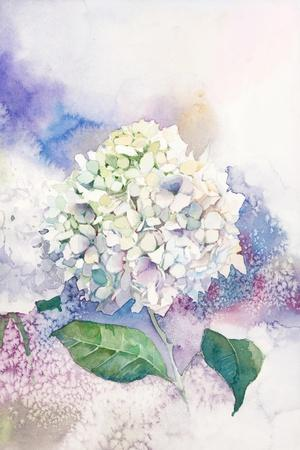 Watercolor White Hydrangea