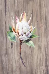 Watercolor White Protea Flower on Wood Surface by Eisfrei
