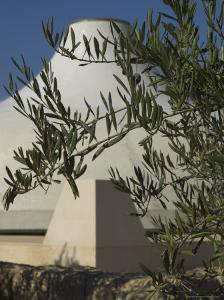 Close up of the Shrine of the Book, with Olive Tree Branches, Israel Museum, Jerusalem, Israel by Eitan Simanor