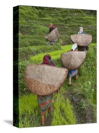 Female Farmers in Field with Traditional Rain Protection, Lwang Village, Annapurna Area,