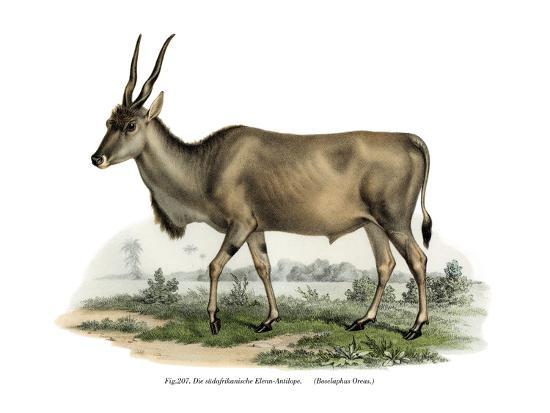 Eland, 1860--Giclee Print