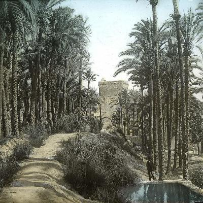 Elche (Spain), the Forest of Palm Trees and the Tower of the Castle, Circa 1885-1890-Leon, Levy et Fils-Photographic Print