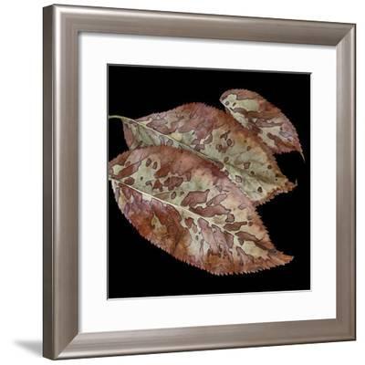 Elderberry Leaves I-William Neill-Framed Giclee Print