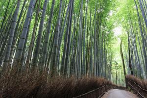 Arashiyama Bamboo Grove in Summer, Arashiyama, Western Kyoto, Japan, Asia by Eleanor Scriven